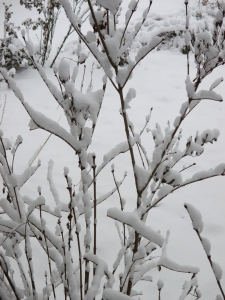 Branches_Snow1