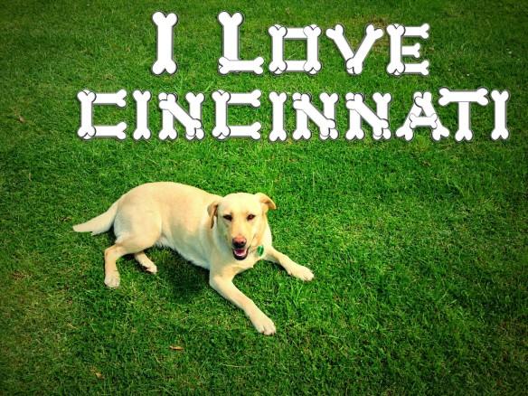 CincinnatiDog