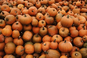 Pumpkins_photo
