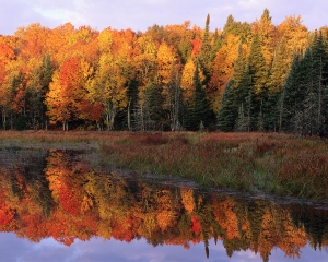 Autumn Foliage Along a Calm Lake Watersmeet, Michigan, USA