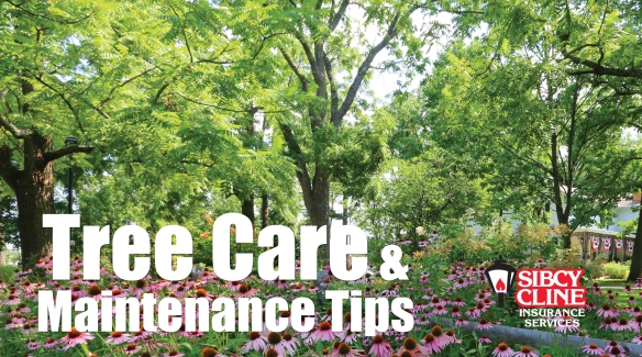 Tree Care and Maintenance Tips
