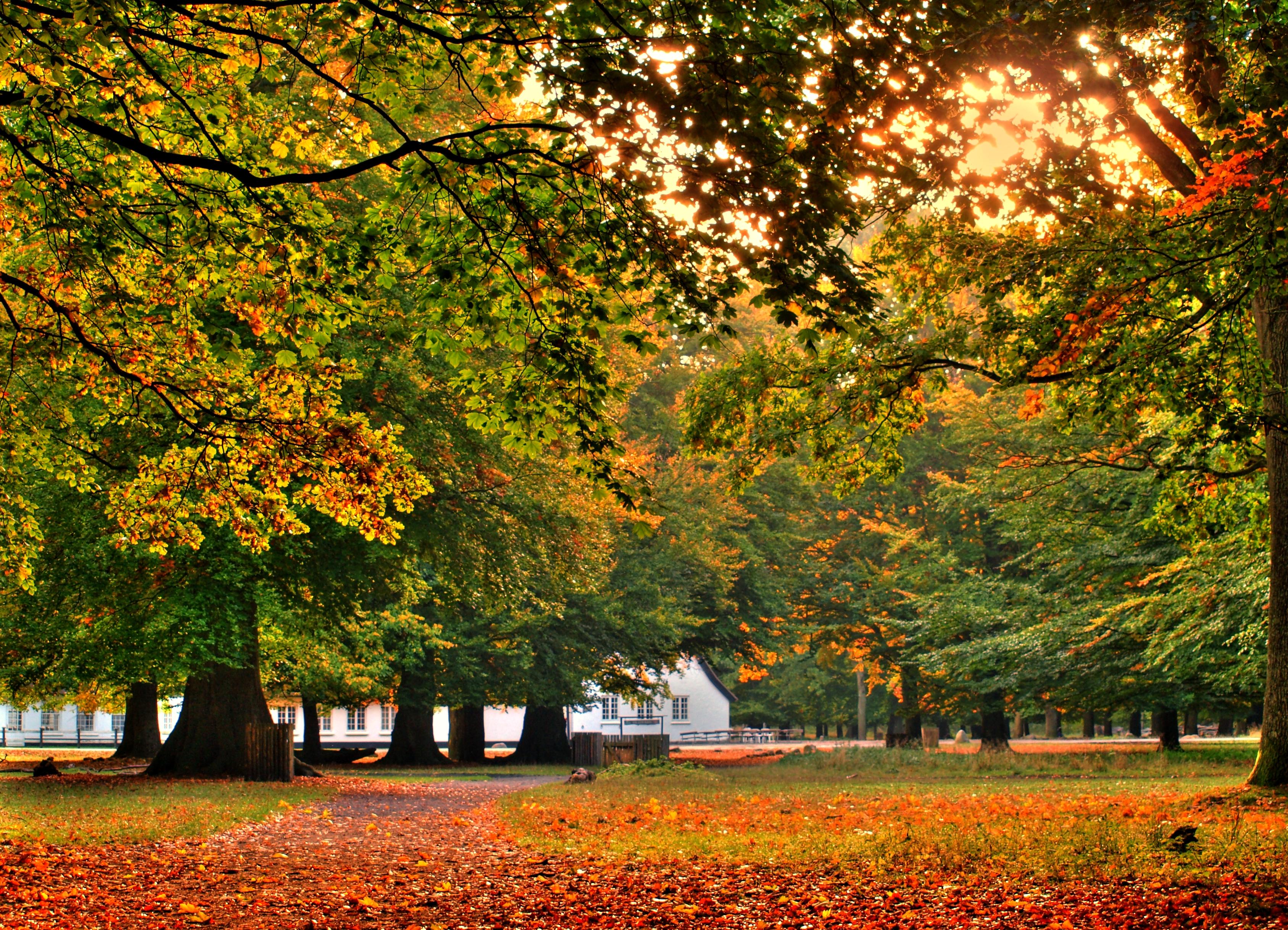 House Autumn
