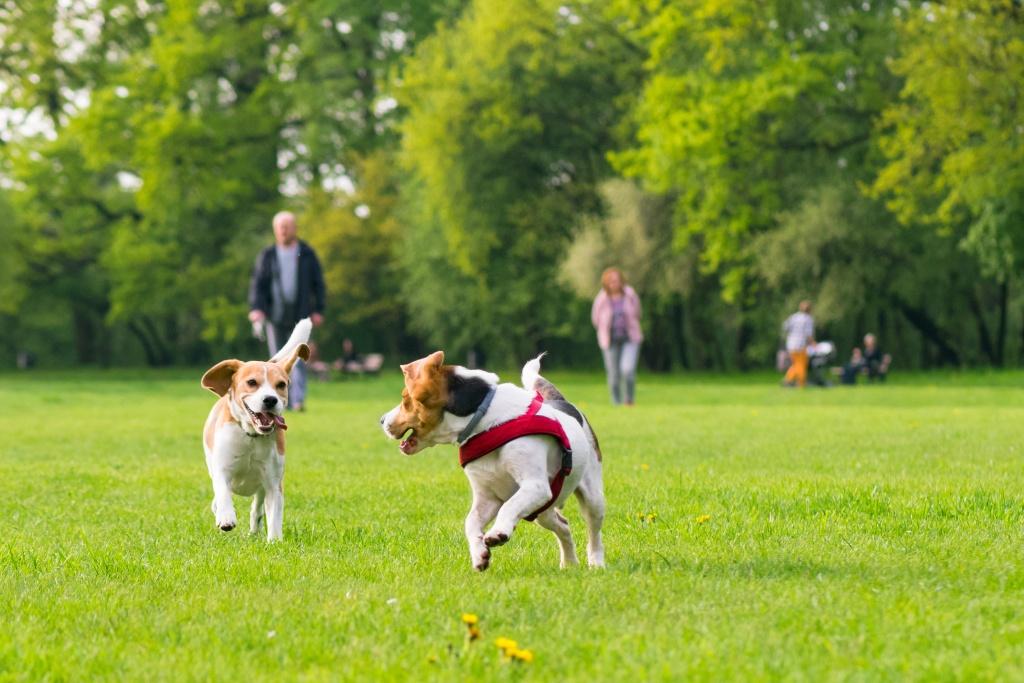 Local dog parks Cincinnati Northern Kentucky Indiana Dayton Springfield